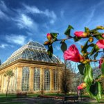 Spring around the corner at @TheBotanics #Edinburgh http://t.co/Nx7ITLfUyt