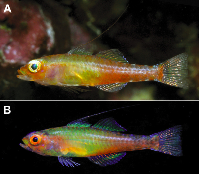 New rainbow-hued fish species found in Indonesia by @ConservationOrg advisor & Pew marine fellow http://t.co/XGWg2eDj4m
