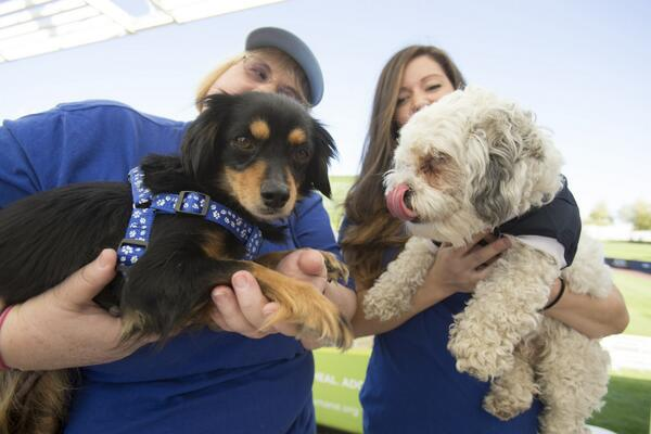 New families for two of Hank's friends from today's Humane Society adoption event. Two more to go. #ballparkpup. http://t.co/ZqVfwvJPlC