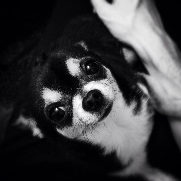 Soirée canine avec un mini-truc microscopique ^•_•^ http://t.co/Gniad6UHFm