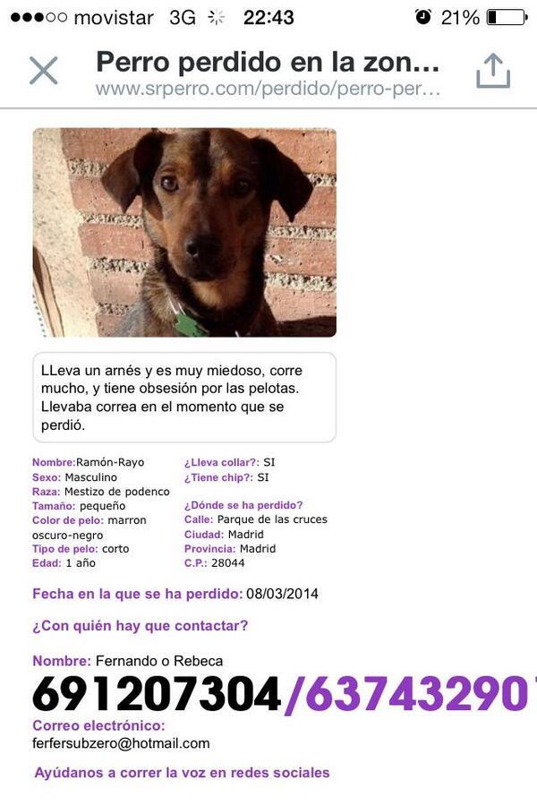 Ayudadme a encontrar a Rayo haciendo un RT, se ha perdido por la zona de Carabanchel. Gracias!! http://t.co/2N0y0waY4L