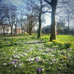 Blackheath in #spring http://t.co/j40S7fciL5
