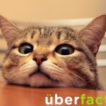 People who own cats are 30% less likely to suffer a heart attack. http://t.co/ymUqttbEPj