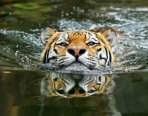 A matter of perspective by Klaus Wiese http://t.co/QkquSbjQtt