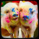 NEON LIGHTS PIGLETS?!!!?!??!!!