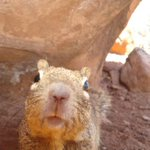 Image of the Day: Squirrel Selfie in Zion National Park http://t.co/nm9HFu3jrm http://t.co/KgVlvNnKg1