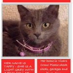 Taffy the cat is missing from Vicars Cross in Chester. Please RT so that we can reunite her with her owners. http://t.co/QymLwzelQ0