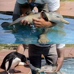 A baby penguin meeting a baby dolphin. http://t.co/sd6LUryDSG