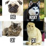 RT @BirthdayFreebie: How I view cats and dogs http://t.co/lTJWDKLST8