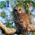 "RT @VoteYesOn1FL: A year-round #Florida resident, the #BarredOwl has a distinct ""Who cooks for you?"" call. #Wildlife #VoteYesOn1 #EcoFL http://t.co/h0j0TqPcQL"