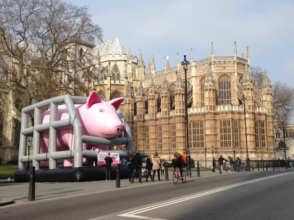 Hope the pig was in London today highlighting inhumane conditions for pigs in Europe http://t.co/TcdYNoiUX4 http://t.co/4Q3IyFgP4M