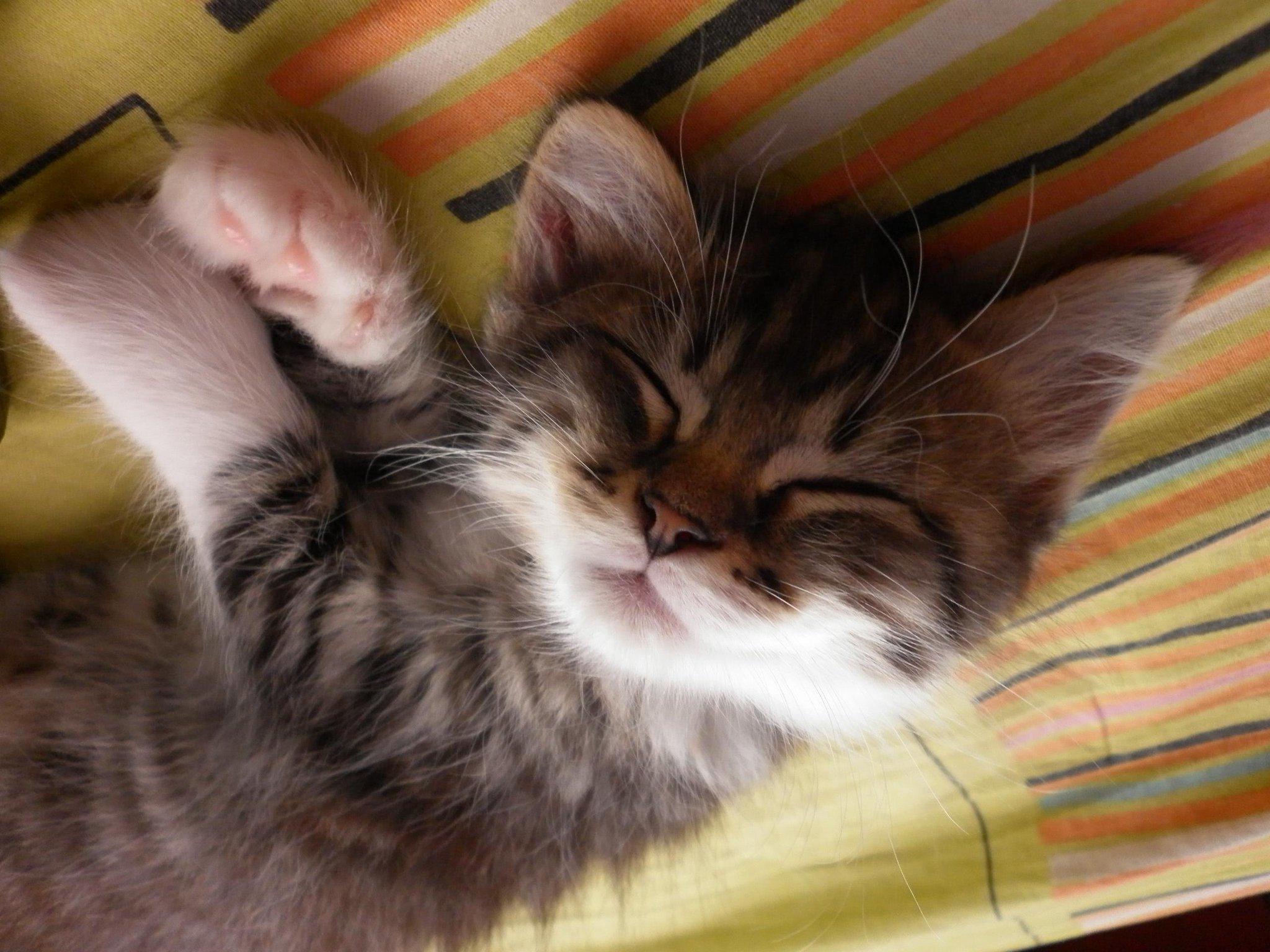 #naptime http://t.co/8RJmlUvHBv