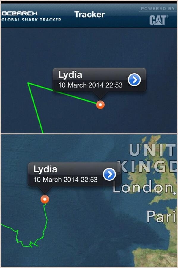 @OCEARCH #lydiatheshark pinged in 50 min ago! Guess what she's heading east towards Britain! #GoSharkGo  #GreatWhite http://t.co/4ntbJrCAeb