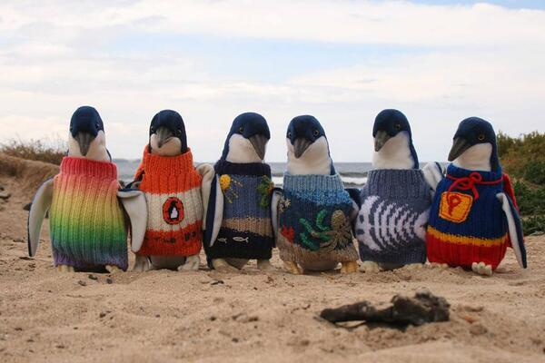 Lessons: 1) Social media can snowball out of control. 2) Knitters love penguins. http://t.co/hP4u1nmaFD http://t.co/UUxmS5FZ59