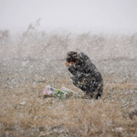 RT @WSJ: A woman prays in the snowfall on the 3rd anniversary of the Japan tsunami: http://t.co/60t3Pu4AtF (Kyodo/Reuters) http://t.co/Imu0vPi8OS