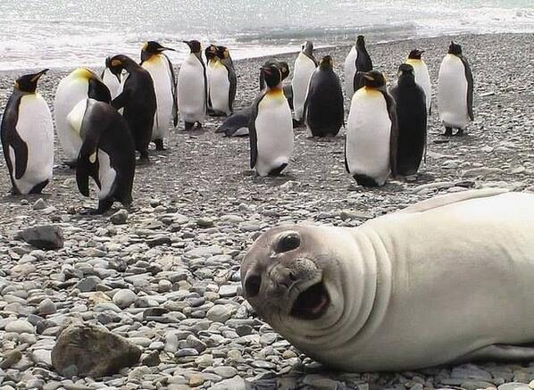 Nature's photobomb! http://t.co/nj6SXP9twj http://t.co/xjhJuOzwB3