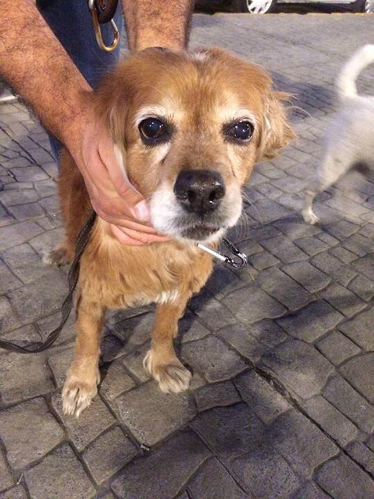 Ayer encontraron a este perri con collar y sin placa perdido en la Condesa. ¡Busquemos al dueño! RT http://t.co/difC9ogDHS
