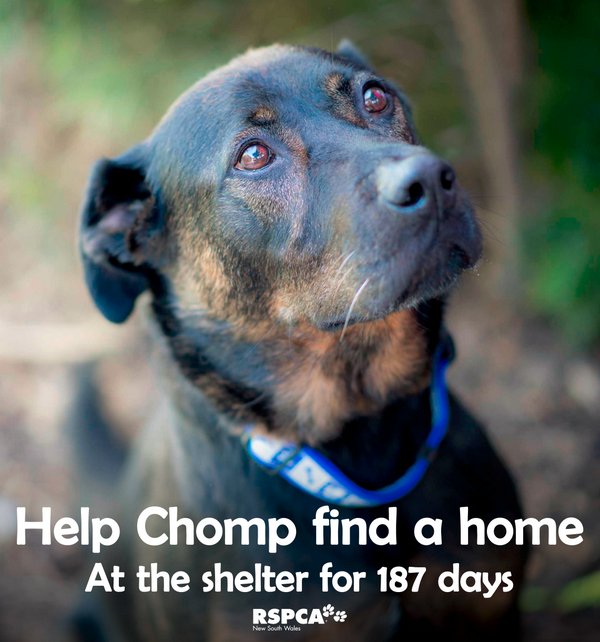 For 6 months Chomp has been looking for a home! SHARE his pic & HELP find him a family: http://t.co/3q6f7TA1qm http://t.co/dzsHLVtgVE