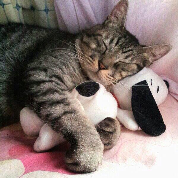 【 可愛かったらRT♪ 】  この枕が気持ちいいですよ (= ̄ ρ ̄=) ..zzZZ http://t.co/X8PqFu2OtY