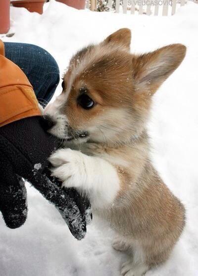【 可愛かったらRT♪ 】  寒いから帰ろうよ http://t.co/yMXifrRoVJ