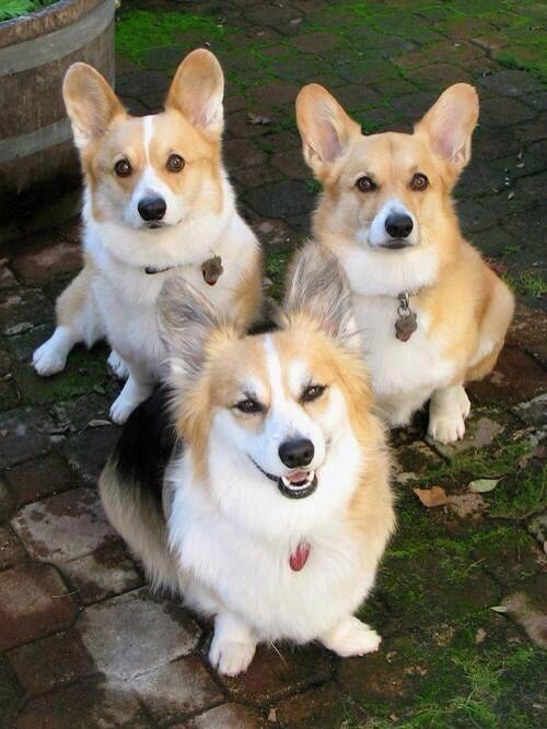【 可愛かったらRT♪ 】  イケメンな犬? http://t.co/NMlakNSMdu