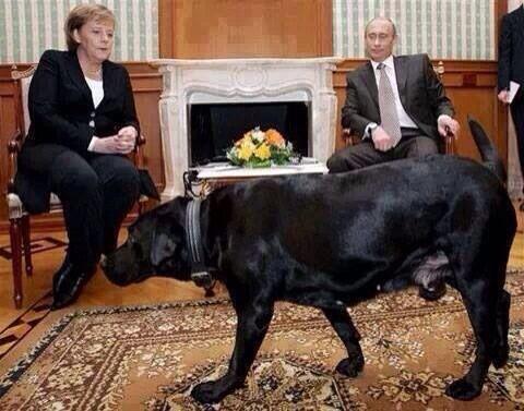 هذا مايسمى بالحرب النفسية ، بوتين يدخل كلبا على ميركل لانه يعرف ان لديها فوبيا الكلاب http://t.co/5zkIusx9GU