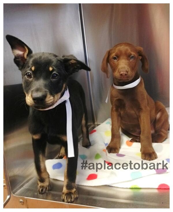 Spay & Neuter is key to stopping the cycle of homeless pets. Adoption is the BEST Option ADOPT Today:) #aplacetobark http://t.co/cp1rHMU1il