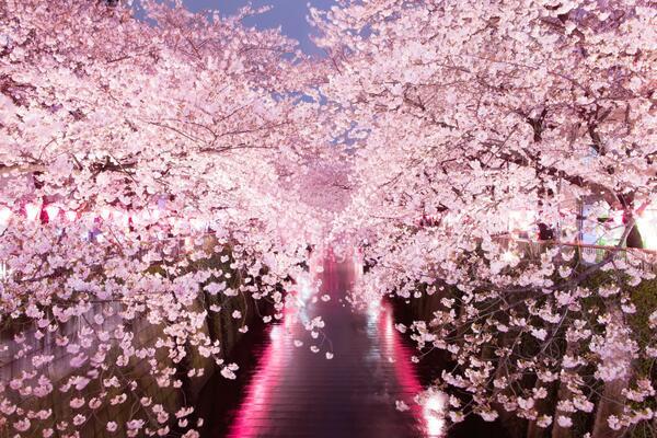 こりずに今年も撮ってしまった。中目黒の夜桜!まだまだ見頃です♩#夜桜#花見#中目黒#目黒川 http://t.co/0UjhHdKkLW