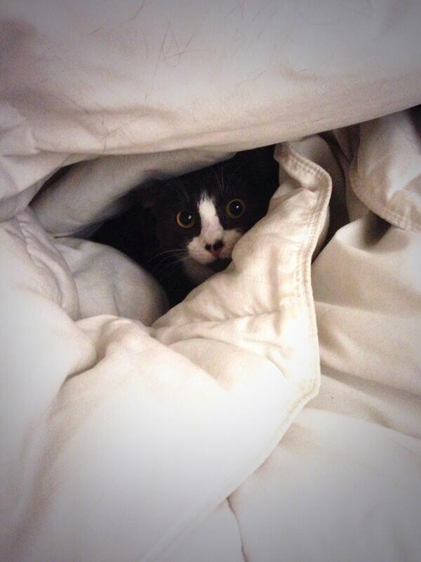 Happy #CatPhotoFriday http://t.co/hlkyVp04WG