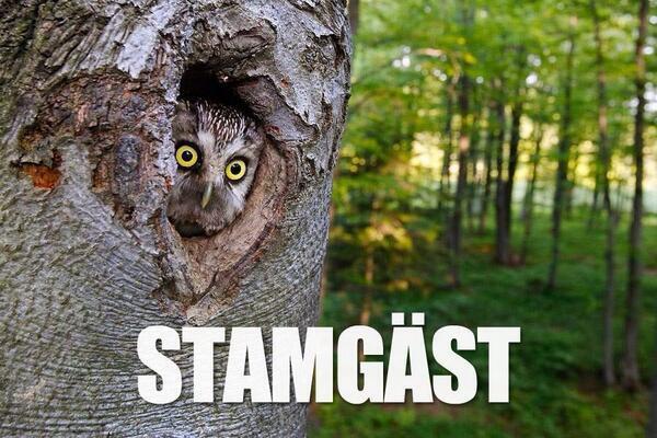 Kvällens sämsta humor:   #stamgäst http://t.co/oArG9QOMwu
