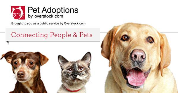#Pet Adoptions is now live. Search #adoption listings nationwide: http://t.co/6DH3kSi5nf RT for these #Cats #Dogs http://t.co/yraBMRuyQJ