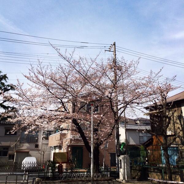 お花見のできるカフェ、東向島珈琲店。 http://t.co/sxCQOm6pb4