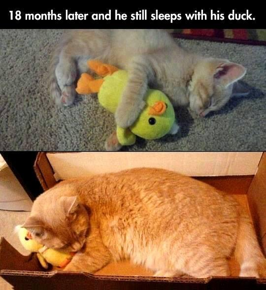 18 months later and he still sleeps with his duck: http://t.co/MqBFKSoR6X
