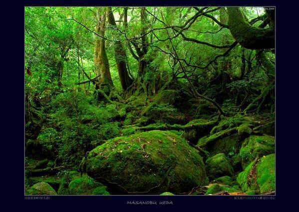 test ツイッターメディア - 【もののけ姫・神秘の森】 屋久島の白谷雲水郷 七本杉を過ぎた辺りに『もののけ姫の森』が広がる。 シシ神様が出てきそうですよね。。。 https://t.co/CS7TR3xVtQ