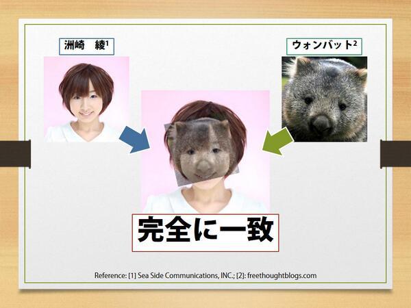 コアラに似ていると評判の洲崎さんですが、ここはウォンバットを推していきたいところ。 #洲崎西