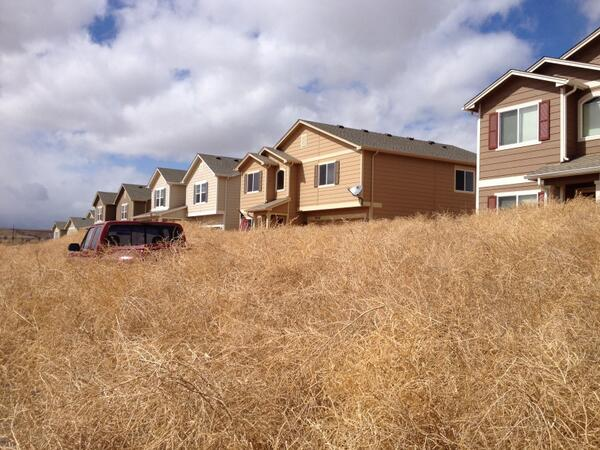 Tumbleweeds Have Taken Over Colorado Blocking Roads And Homes