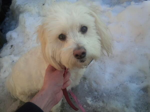 Anyone recognize this pup? Found near Main/Alexander in #cbridge. Pink collar, no tags. 'invisible fence' collar. http://t.co/O1scBDGuwH