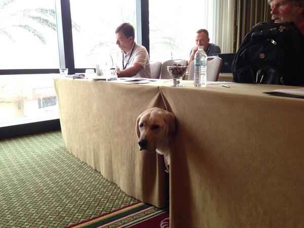 Front row participant for my #csun14 workshop - a guide dog peeking out from under table. I love this conference! http://t.co/ZZrV4l9d0e