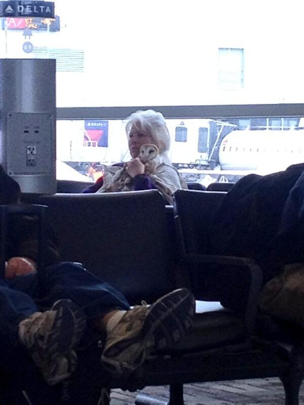 BREAKING NEWS. THERE IS A WOMAN CUDDLING A LIVE OWL A MY GATE. http://t.co/F20w52x7eV