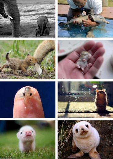 Beautiful world of baby animals: http://t.co/Lii4gucMPO