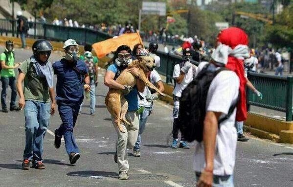 #EXTRAVIADO RT @kittybstds: Choco perrito Ciencias UCV perdido #20M,si alguien sabe de su paradero avisar http://t.co/d54GH3aol5