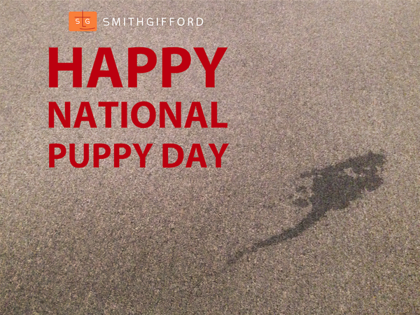 Dogs love our office. Puppies love our carpet.  #nationalpuppyday http://t.co/ffDia3X4XY