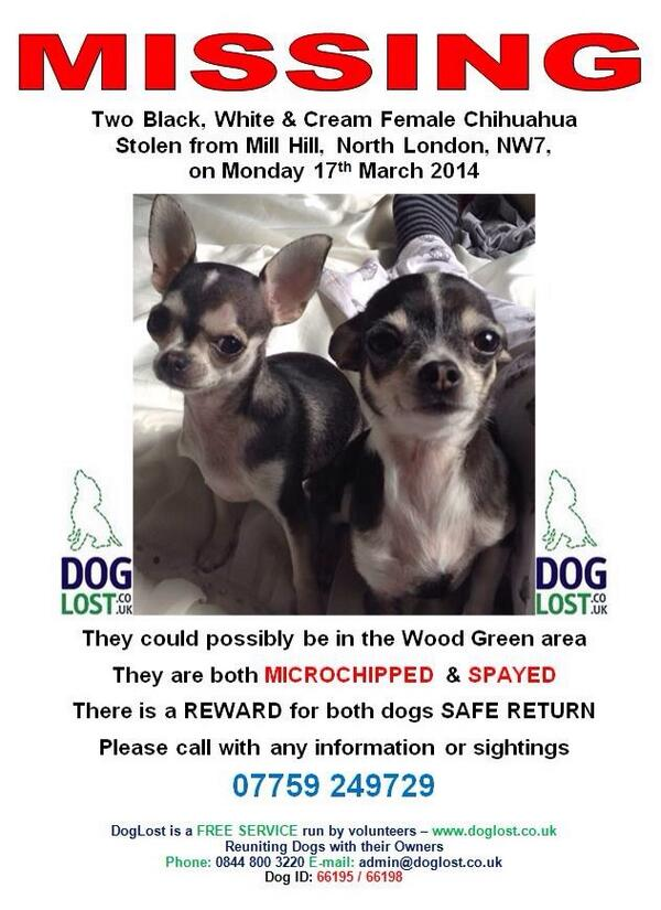Lori Buckby (@OnlyLittleLori): £1000 CASH REWARD 4 any1 that can return my stolen Chihuahuas 2 me or any info leading to there safe return! RT RT RT http://t.co/WztTx1d139