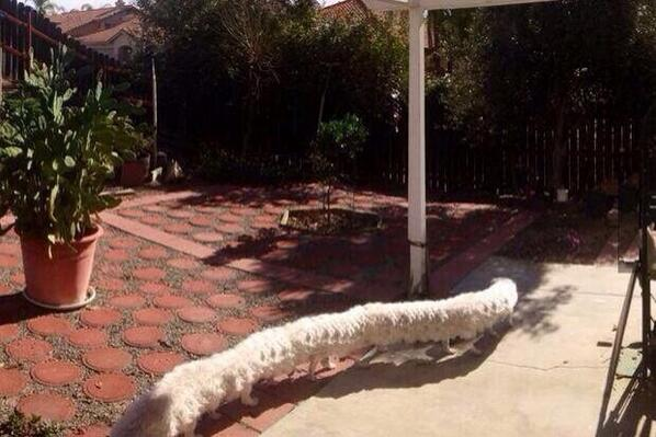 Wow! RT @OfficialBedale: don't take a panorama picture whilst your dog walks past http://t.co/yXDV1XfrBW
