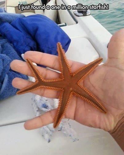 One in a million starfish: http://t.co/ZNRFxh4jKw