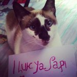 RT @juliana_rogue: @JLo #ILuhYaPapi #ILuhYaMami #whosyapapi #cute #teamo http://t.co/NJ03iX2Uxy