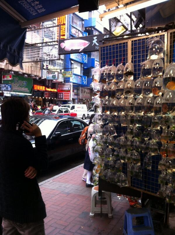 Hong Kong a nonstop riot of commerce: Prada on every corner for the mainland Chinese; pet goldfish stores for locals. http://t.co/hes0DuTw6I