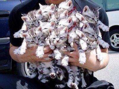 仕事をたくさん抱えてしまった時は、仕事を子猫だと思うと楽になる。 http://t.co/h658vAHRDP