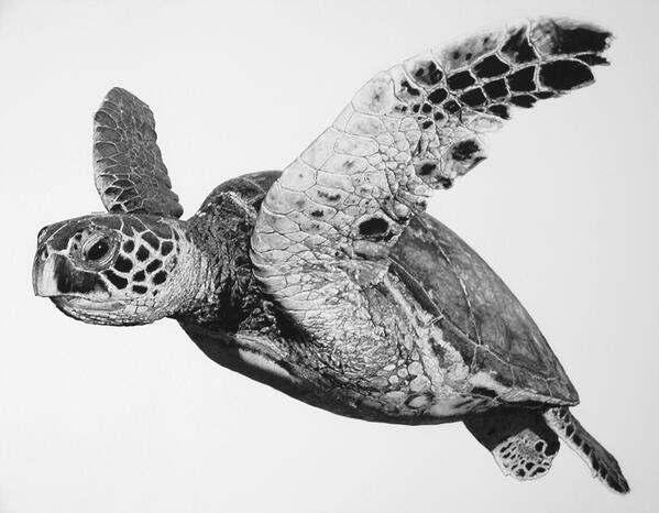 Turtle drawings designs