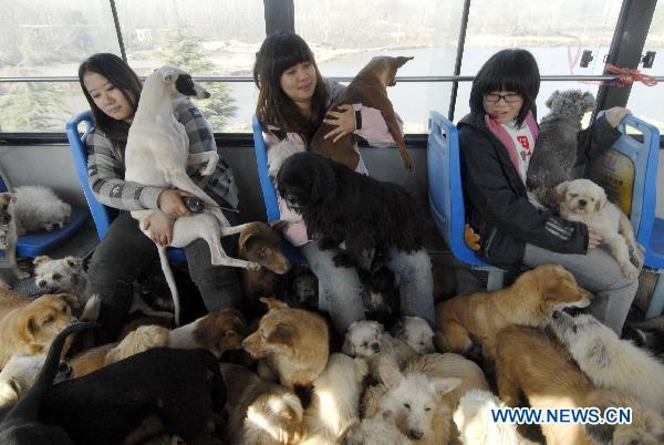 Rescued dogs from slaughter are moved to their new home by nice Chinese activists. Pls support http://t.co/FlpFUxD68D http://t.co/sJQb4ziuML